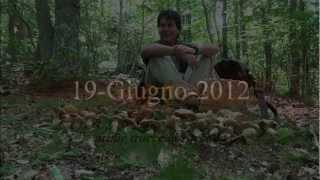 Porcini la raccolta 2012 parte2