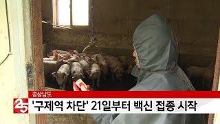 '구제역 차단' 경상남도, 21일부터 백신 접종 시작