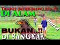 Jalak Lawu Pelepasan Jalak Lawu Di Monumen Mojopahit Gunung Lawu  Mp3 - Mp4 Download