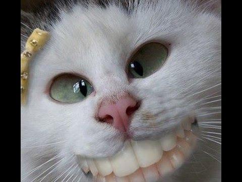 Ржачные Коты Фото