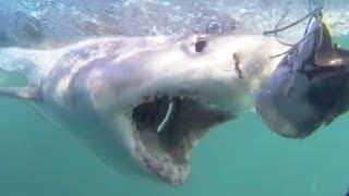 SHARK WEEK! Crazy Shark Videos Caught on Camera | Cage Diving & Diver Attacks 2018