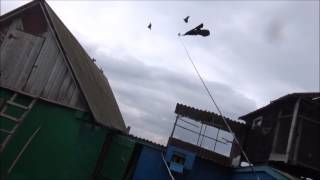 Охота на охотника голубей