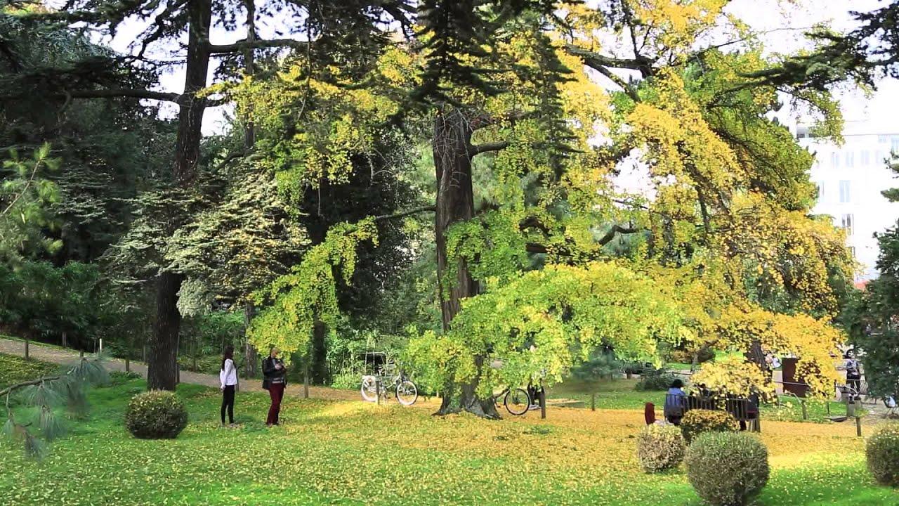 Ginkgo biloba du jardin des plantes 3 2015 youtube for Scopitone 2015 jardin des plantes