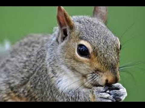 How To Clean Squirrels Quick And Easy