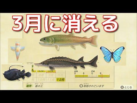 あつ森 11月 魚