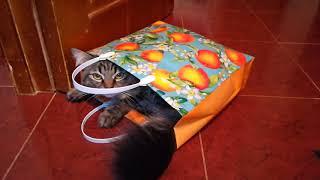 Подарочный пакет и кот ТимТим — Gift bag and TimTim cat