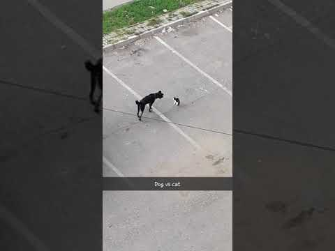 Dog VS Cat Real Fight
