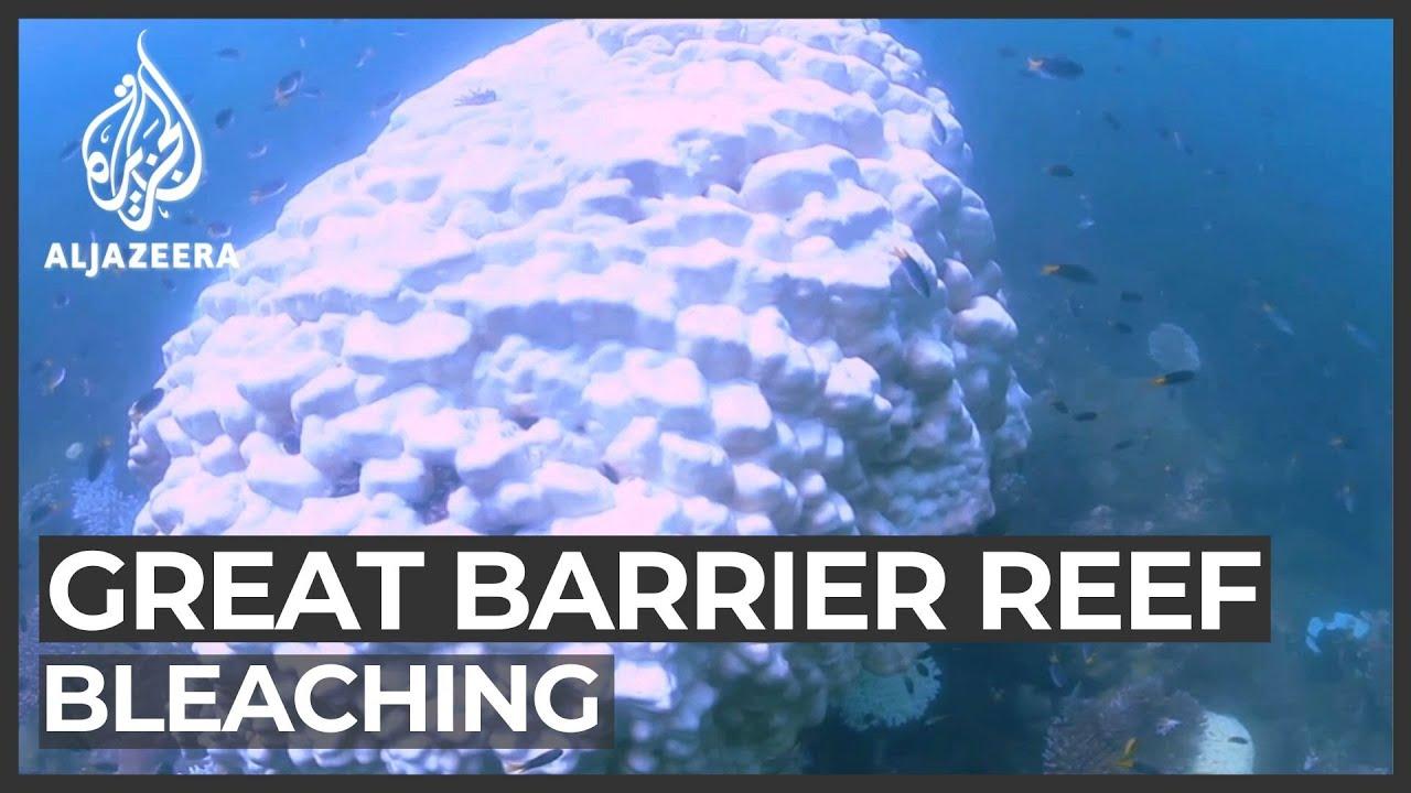 Australia's Great Barrier Reef shows record devastation: Scientists – Al Jazeera English