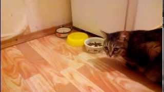 Кошке дали новый корм (супер премиум класса)
