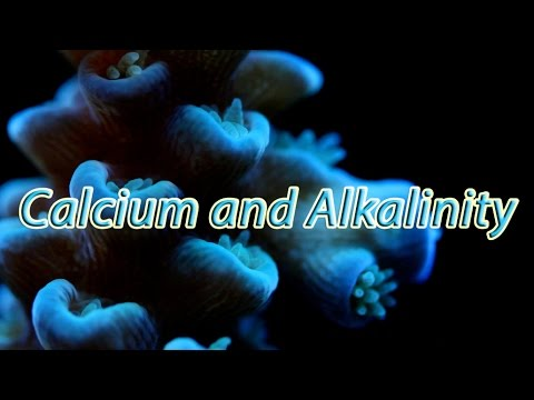 Quick Chemistry: Reef Aquarium Calcium And Alkalinity