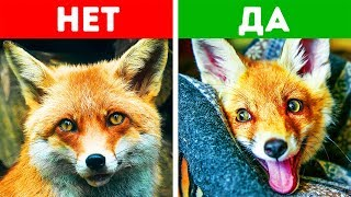 10 Экзотических Животных, Которых Можно Завести Дома