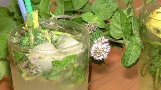 мохито - простой и доступный рецепт \ Как приготовить мохито дома