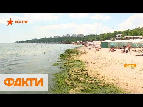 Зеленое море в Одессе: чем опасно и когда можно купаться