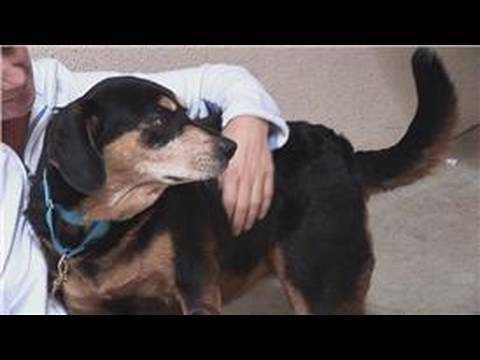 Pet Care : How to Choose a Dog