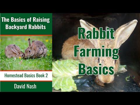 rabbit-husbandry