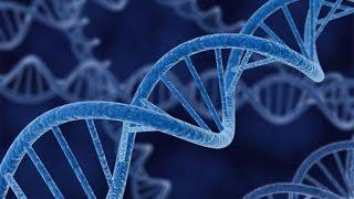 Мой опыт. ДНК.