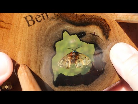 Making a Tiger Moth Desk Clock - Insect in Resin