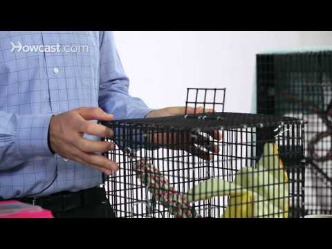 What Not to Do with a Sugar Glider | Sugar Gliders