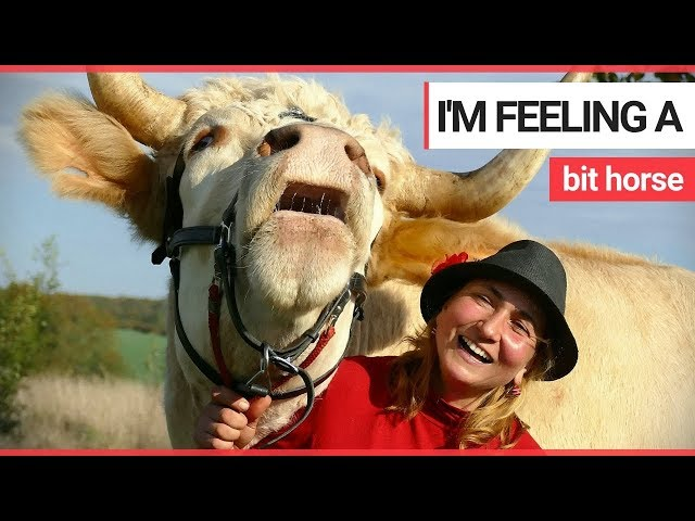 Meet the bull who thinks he's a horse | SWNS TV
