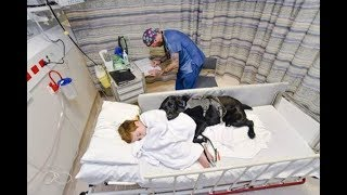 Loyal dog refuses to let boy go hospital without him | Daily Viral Stories