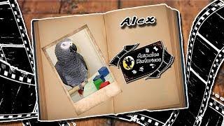 Alex el perico | Considerado el genio de las aves | (Animales Historicos)