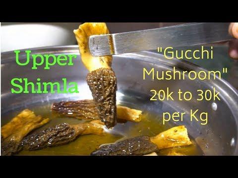 Narkanda, Upper Shimla, Himachal Pradesh: Food & Things to do