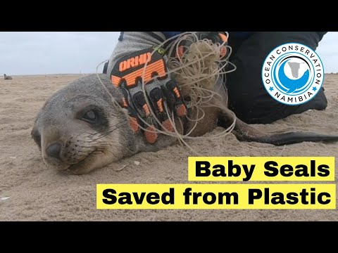 3 Baby Seals Rescued from Plastic