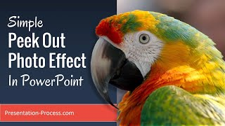 Simple Peek Out Photo Effect In PowerPoint