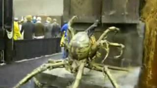 decending spider professional halloween haunted house animatronic prop