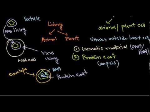 1  virus structure introduction