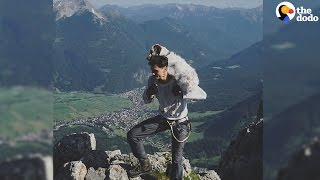 Dog Rescued From The Streets Gets to Hike Through The Alps Now