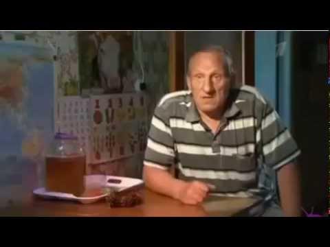 Хвойный лекарь: Лечение сосновыми шишками