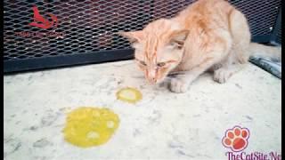 Dokter Hewan - Pertolongan Pertama Anjing dan Kucing Saat Keadaan Darurat