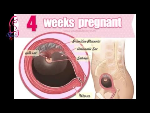 4 weeks pregnant and 4 weeks pregnant Signs And Symptoms 4 weeks ultrasound || Pregnancy Term