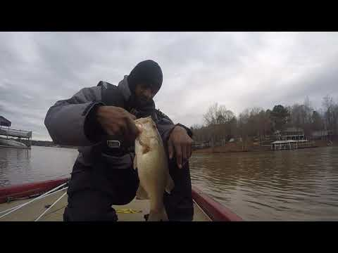Lake Harding Bass Tournament - Stained Muddy Water