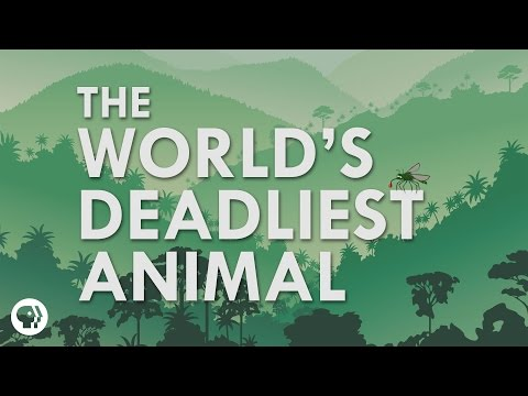 What's The Deadliest Animal In The World?