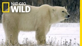 Built for the Arctic | Destination WILD