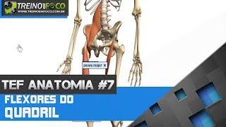Treino em FOCO Anatomia #7 - Flexores do Quadril