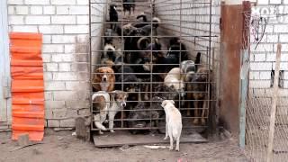 Директор воронежского приюта для бездомных собак грозится выпустить на улицу 150 псов