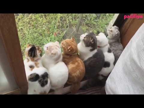 9 Kedilik Dünyanın En Şirin Ailesi