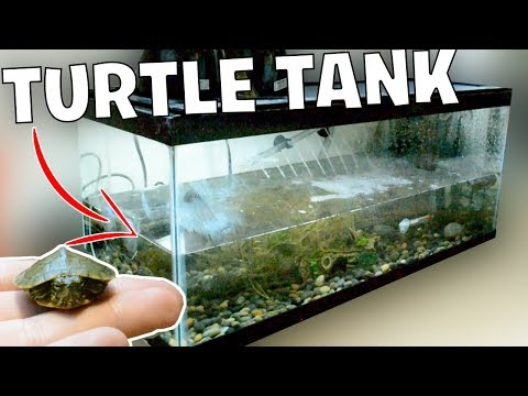 NEW Baby TURTLE Tank Setup! (For Rescue Turtles)