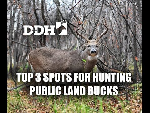 Top 3 Spots for Hunting Public Land Bucks