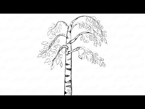 Как нарисовать красивую березу