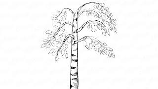 Как пошагово нарисовать березу: инструкция от EvriKak