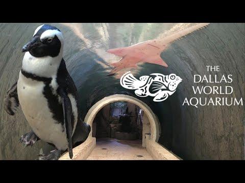 Dallas World Aquarium Tour & Review with The Legend