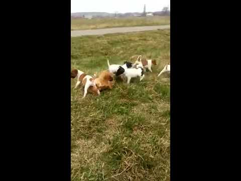 Собаки и щенки в Новосибирске даром. Фото и цены - НГС