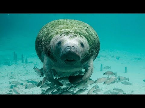 10 Amazing Facts about Manatees