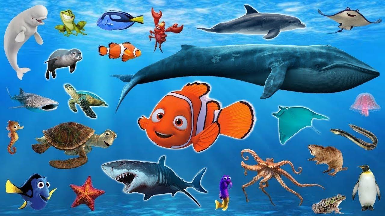 животные живущие в океане в картинках объясняет гараже