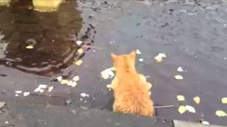Кошки охотятся за рыбой в озере