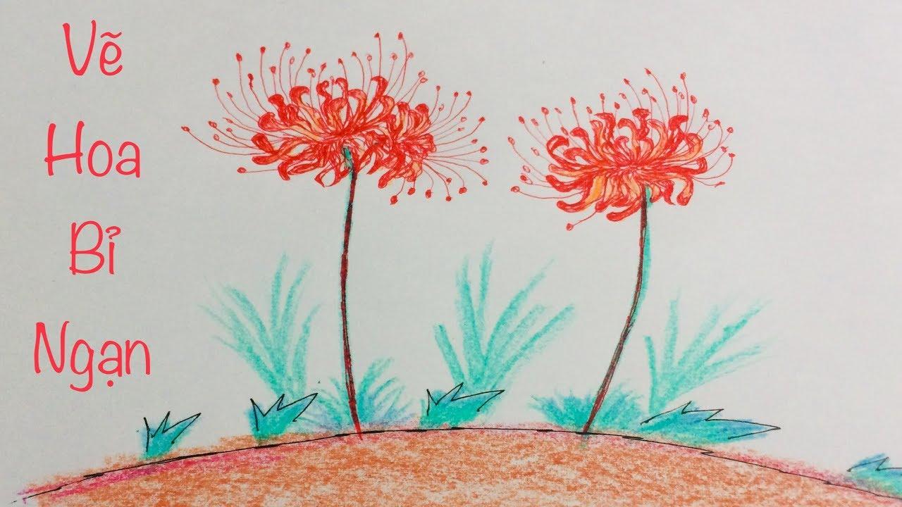 Cách vẽ hoa bỉ ngạn